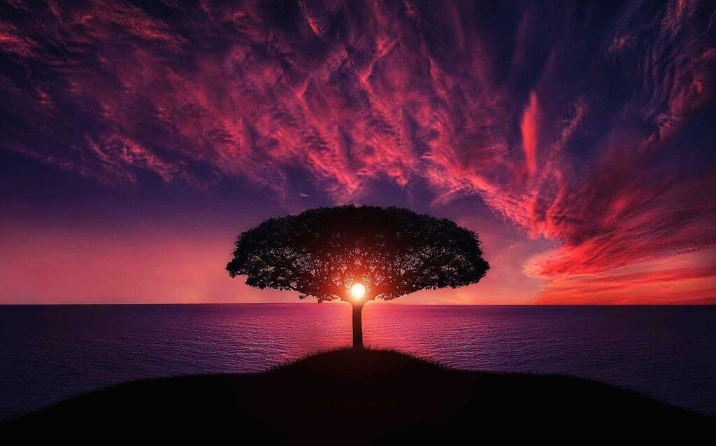 Tree sun ocean silhouette